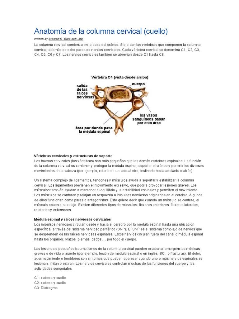 Anatomía de La Columna Cervical