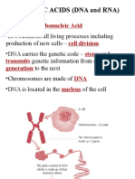 Nucleic Acids Powerpoint1