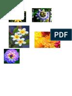 FLOWER FESTIVAL   2015.docx