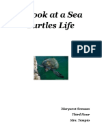 a look at a sea turtles life-research paper