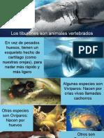 Tiburón Ppt