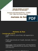 Anatomia da Raiz.pdf