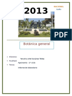 224552310-Informe-de-Botanica-General-1.docx