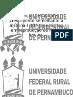 Presentation(1) (1)