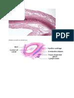 Histology THT