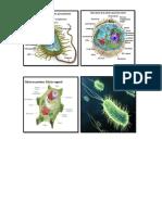 Recortes Celulas Procariota Eucariotas y Bacteria