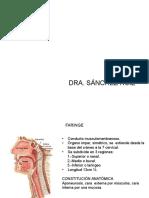 Faringe Clase 12