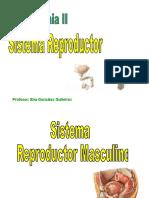 13 Sistemareproductor 110117232056 Phpapp01