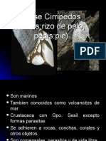 cirripodos-100121190458-phpapp01.ppt