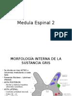 Medula Espinal 2