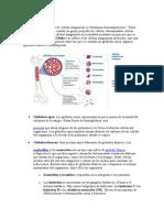 Las células sanguíneas.docx