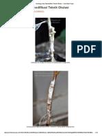 Sambung Sisip, Memodifikasi Teknik Okulasi