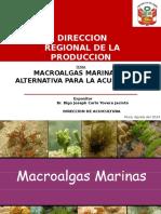 CULTIVO DE MACROALGAS PIURA