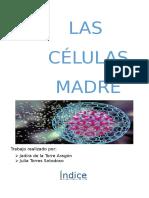 Las Células Madre.pptx
