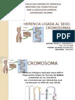 Herencia Ligada Al Sexo Cromosomas