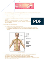SPM Science Notes - Body Coordination