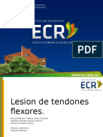 tendones flexores