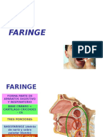 16) Faringe y Laringe