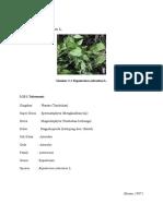 eupatorium odoratum (1)