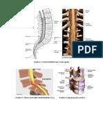 Docfoc.com-Sindrom Konus Medullaris Dan Kauda Equina