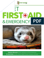 ferret first aid   emergency care  ferret-world