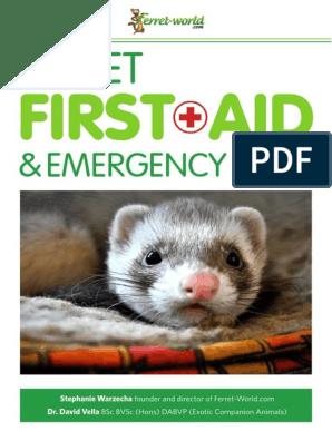 Terrific Ferret First Aid Emergency Care Ferret World Veterinary Machost Co Dining Chair Design Ideas Machostcouk