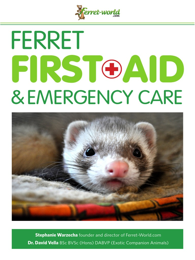 ferret first aid emergency care ferret-world   Veterinary Physician ...