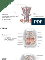 Anatomía Materna Parte 2