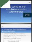 Utilización Glucosa vías metabolicas