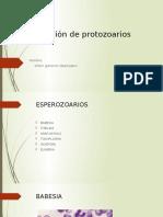 Clasificación de Protozoarios