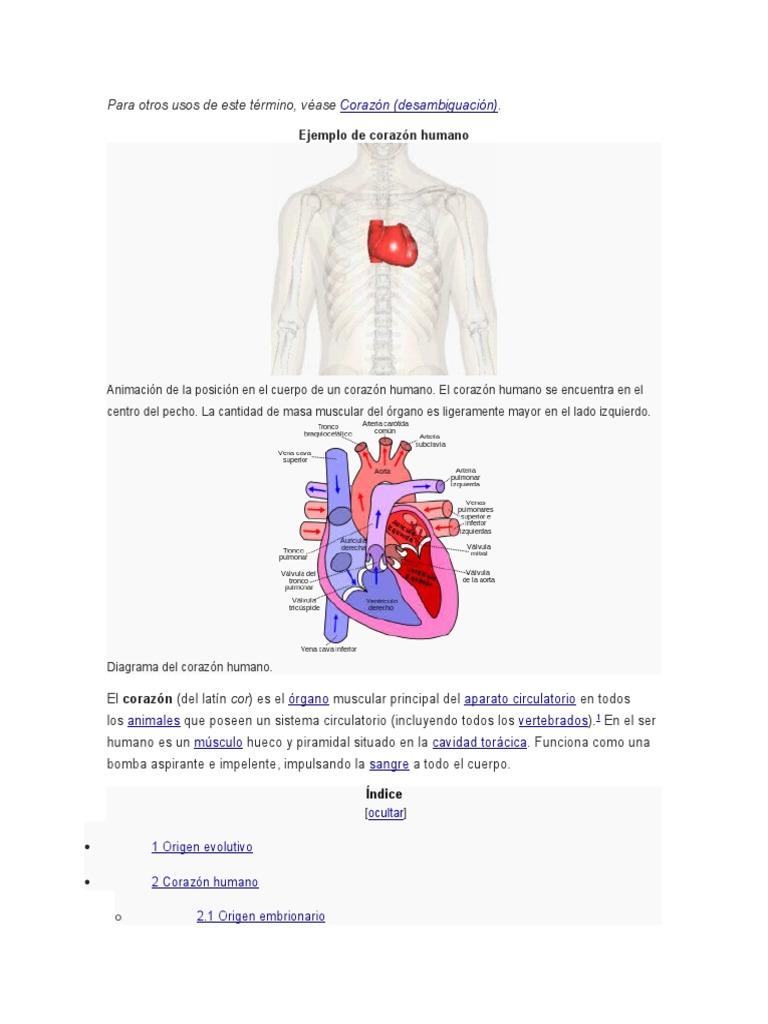 Fantástico Diagrama De Un Corazón Humano Modelo - Anatomía de Las ...