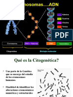 CITOGENETICA 1 W.ppt