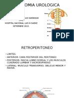 1. Anatomia Urologica