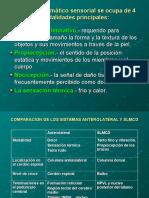 fisiologia-del-dolor-1222387766649948-8