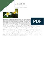 Article   Floristería La Rosaleda (14)