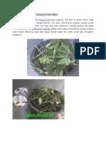 Cara Memindahkan Sarang Kroto Alam.docx