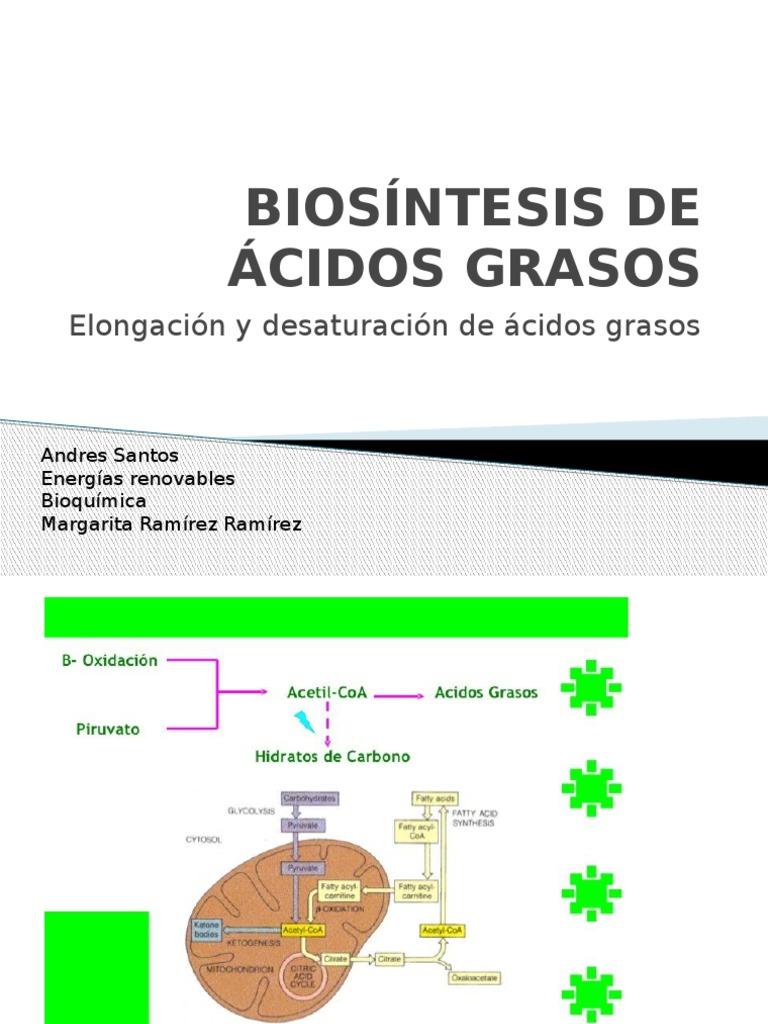 Maniquíes aproximadamente dieta acelerar metabolismo pdf