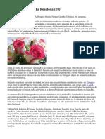Article   Floristería La Rosaleda (19)