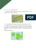 Ukuran Plankton