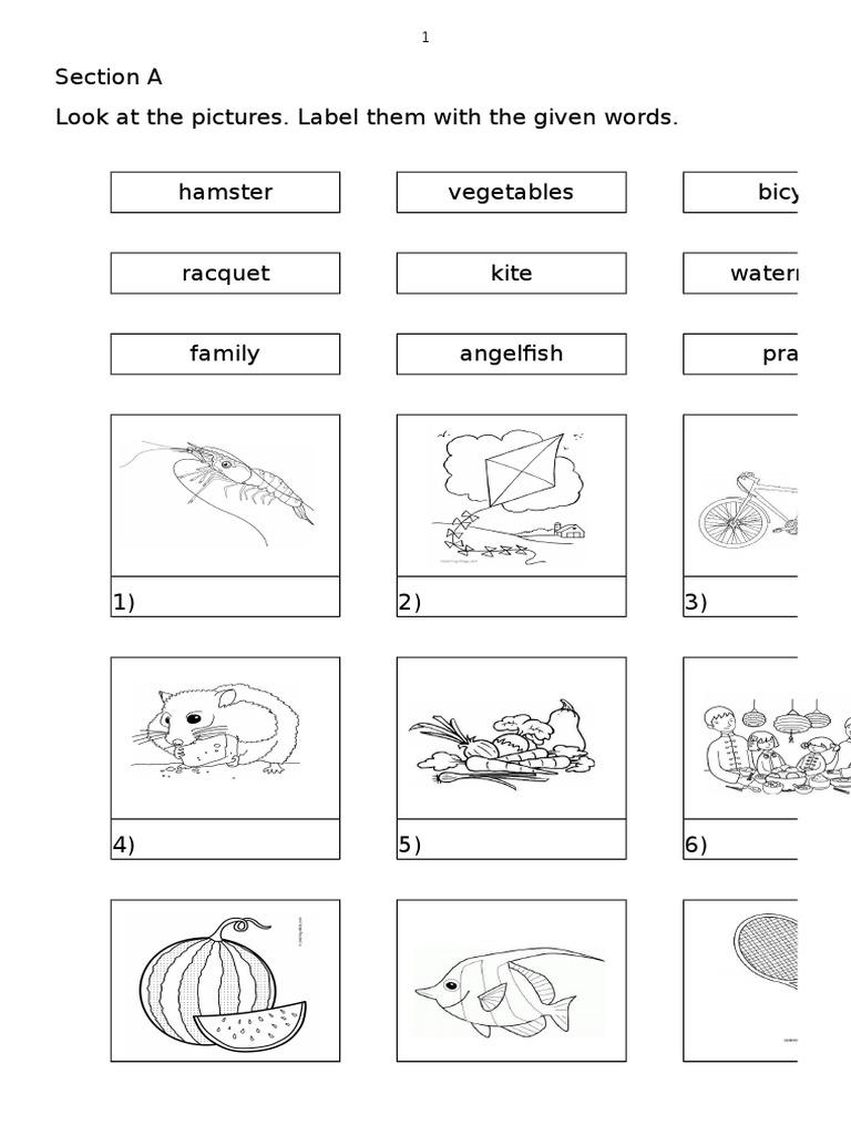 Soalan Bahasa Inggeris Tahun 3 Peperiksaan Pertengahan Tahun Frog Nature