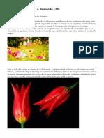 Article   Floristería La Rosaleda (28)