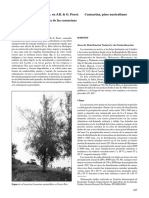 Casuarinaequisetifolia.pdf