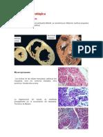 Anatomía patológica monografia