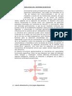 Fisiología-Digestiva