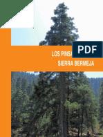 Rutas Los Pinsapares de Sierra Bermeja