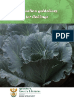 Prod Guide Cabbage