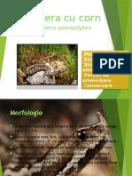 Proiect Ecologie Sem II