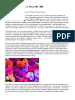 Article   Floristería La Rosaleda (44)