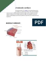 Anatomía del músculo cardíaco.docx