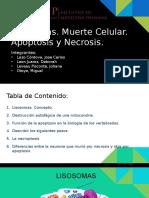 Lisosomas. Muerte Celular (3)
